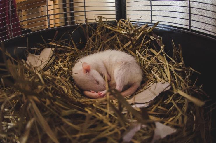 mouse + beren + kikimonchi_8